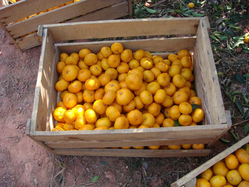 baby mandarin in carton