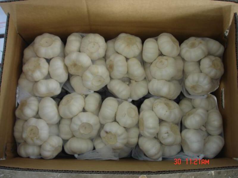 garlic packing 1
