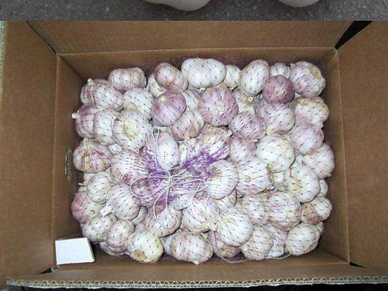 garlic packing 2