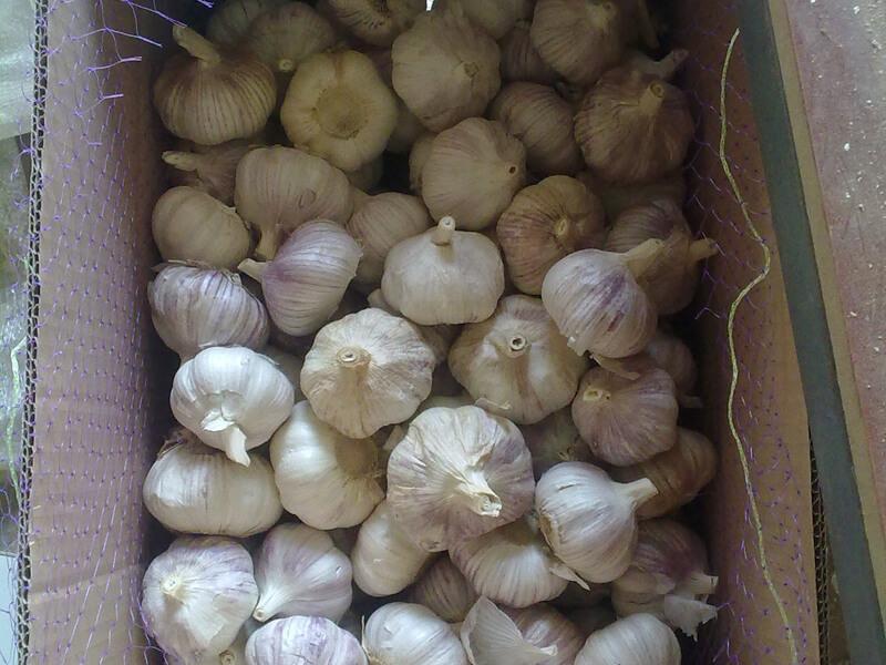garlic packing 3