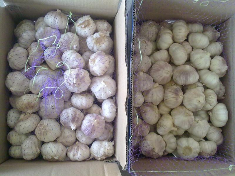 garlic packing 4